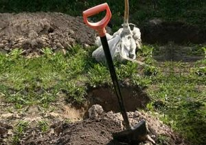 Посадочная яма - источник питательных веществ для дерева
