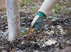 Рыхление способствует поступлению воздуха в почву