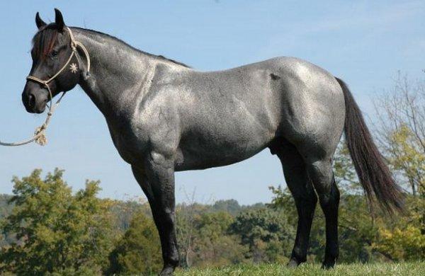 Мышастая масть лошади описание и характеристики отмастки внешний вид и происхождение