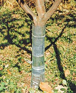 Ствол дерева можно обложить для защиты от грызунов