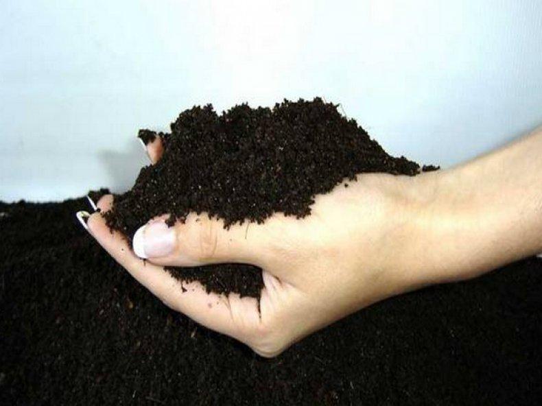 Почва для бархатцев