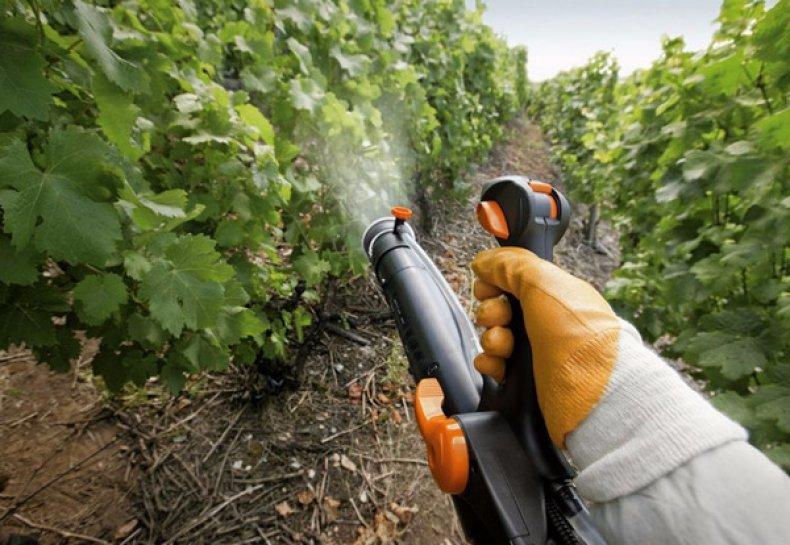 Виноградный зудень как бороться с войлочным клещом на листьях