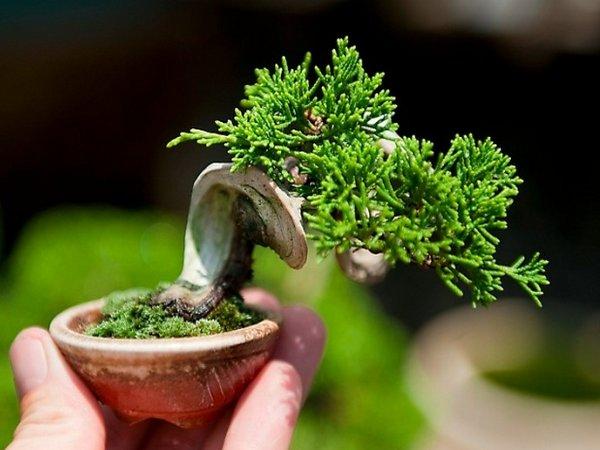 Искусство выращивания деревьев