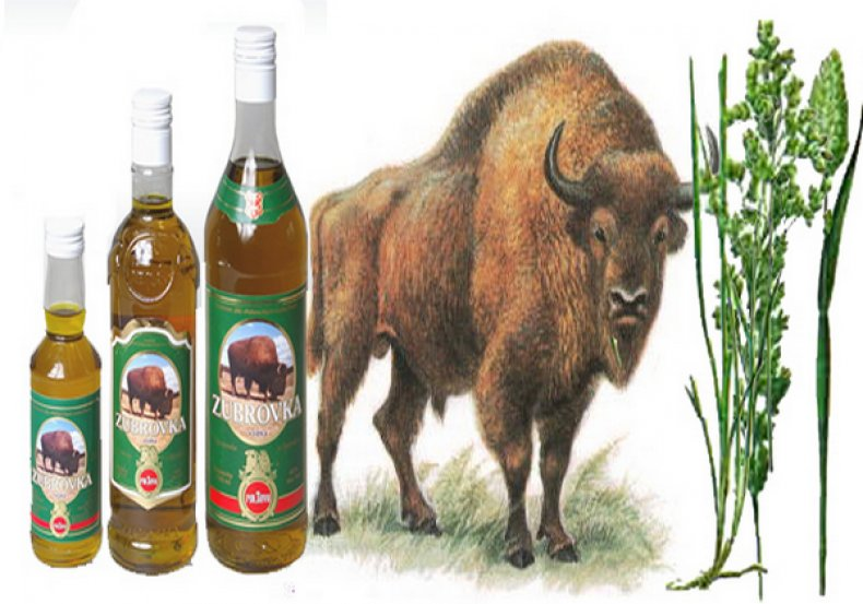 трава, зубровка, противопоказание, фото, рецепт