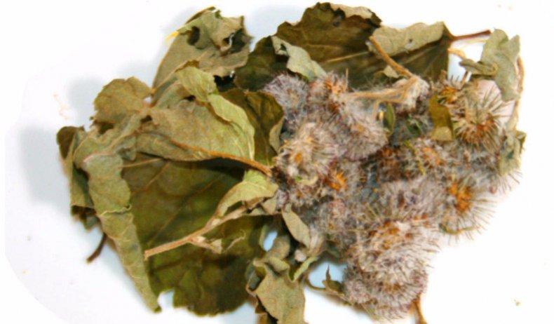 Сушеные листья лопуха