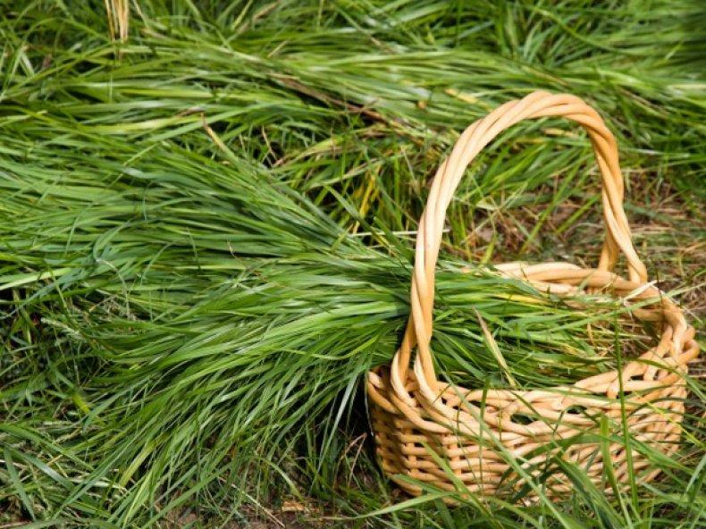 Свеженакошенная трава