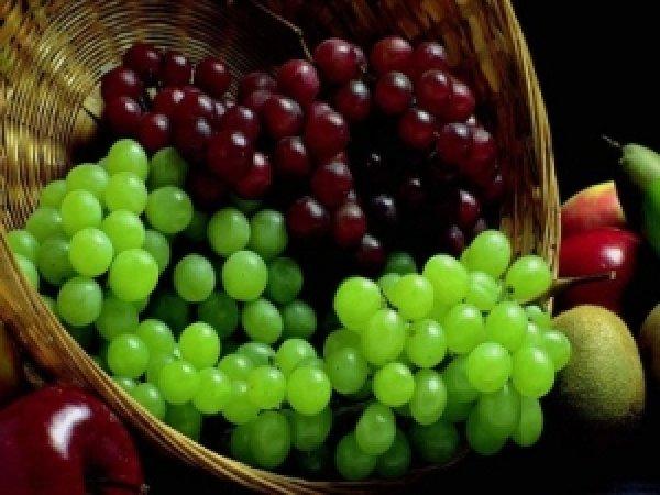 Особенности осенней прививки винограда — Superfb
