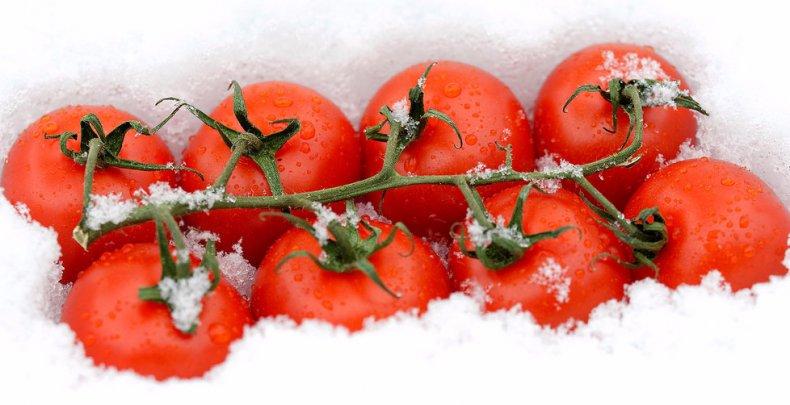 Замораживать помидоры