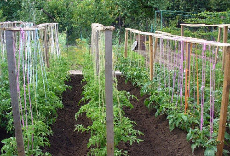 Подвязка томатов