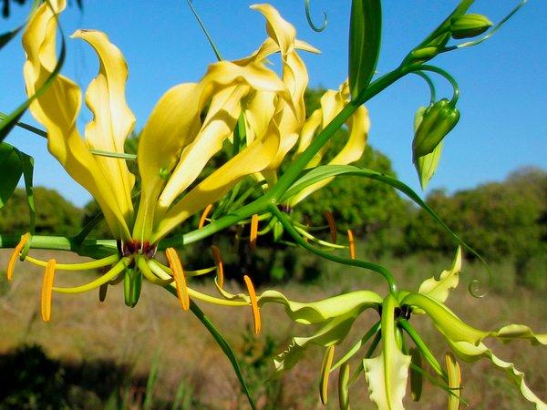 Комнатные цветы из семян: как вырастить в домашних условиях 43