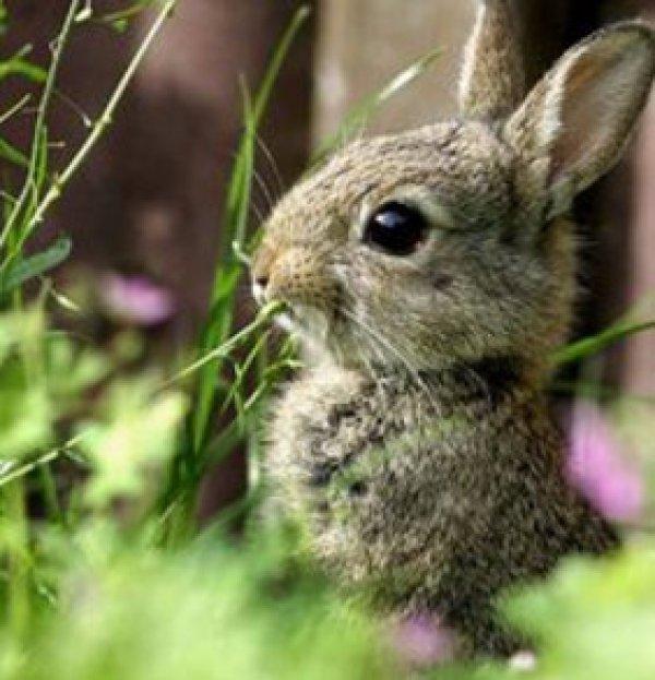 Какую траву можно давать кроликам а какую нельзя
