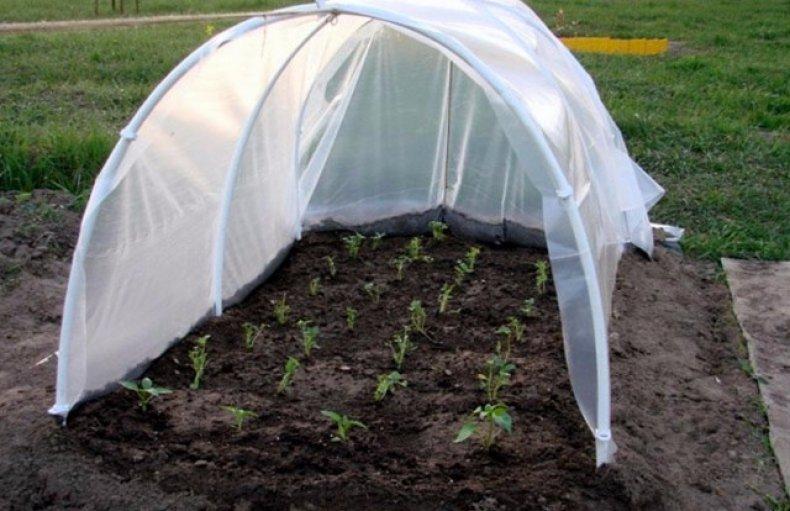 Выращивание огурцов в парнике