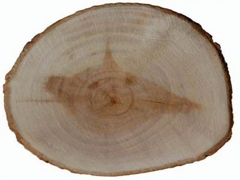 Кора белой ивы