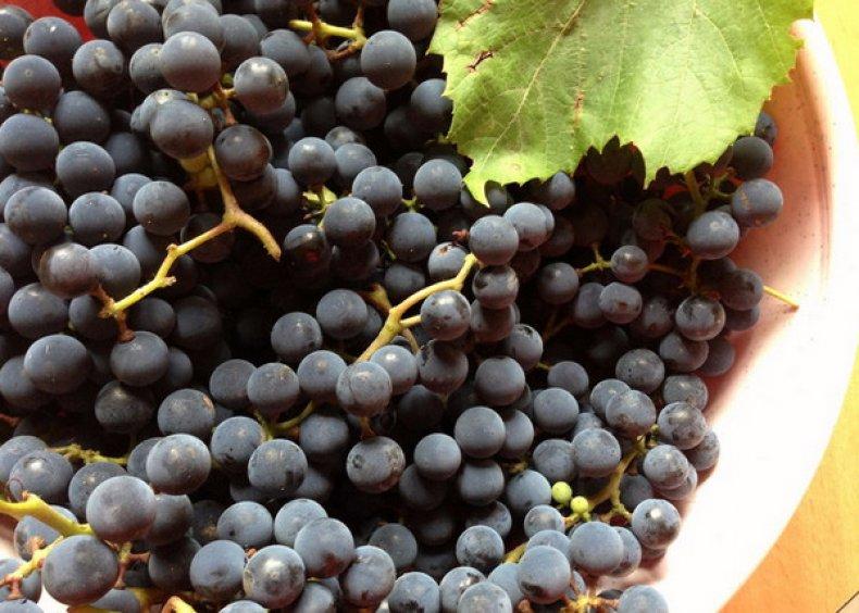 виноград альфа описание сорта фото узнать