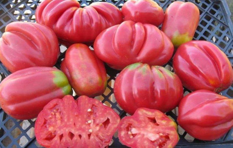 томат, инжир, розовый, описание, сорт, фото