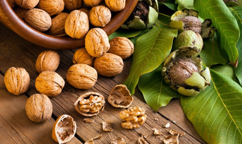 как просушить грецкие орехи в скорлупе