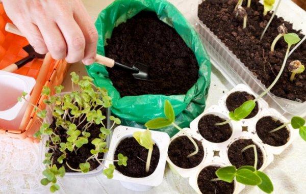 как готовить землю для рассады томатов