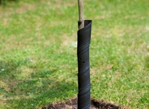 Также дерево нужно защищать от вредителей