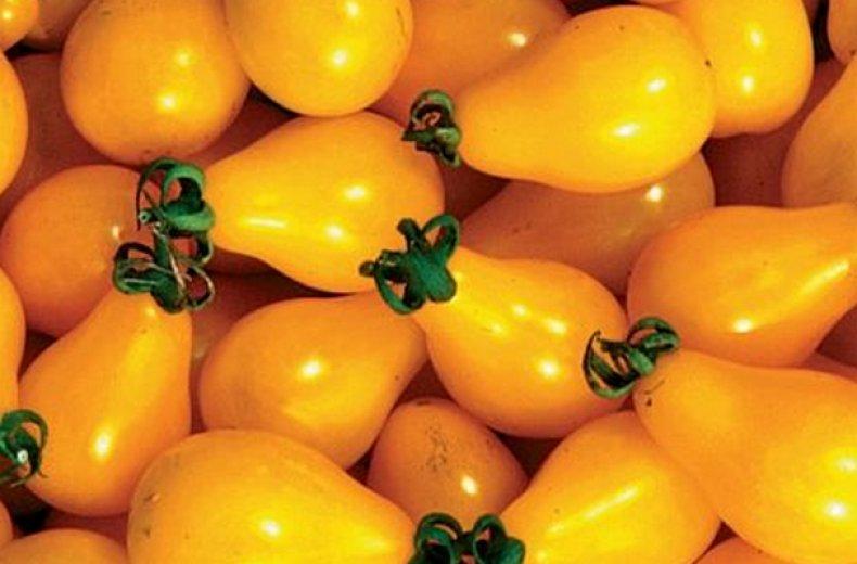 «Оранжевая груша»