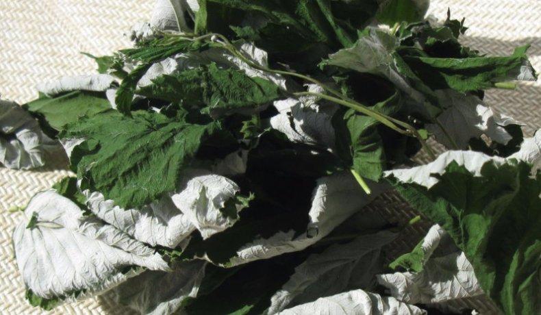 Сушеные листья малины