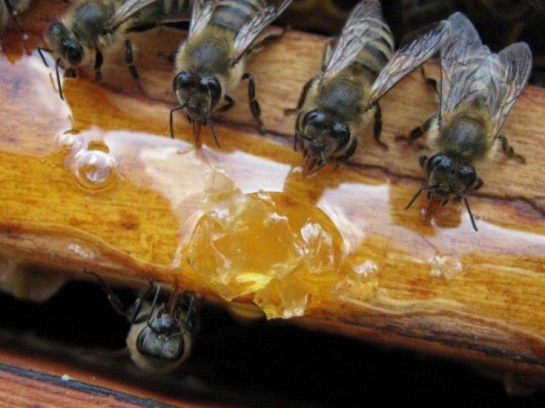 Медовая подкормка для пчел
