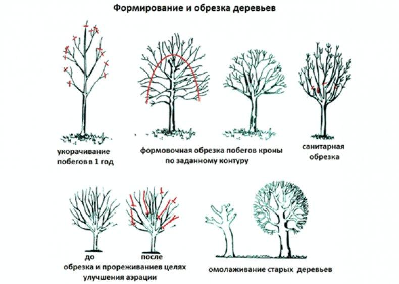можно ли осенью обрезать деревья