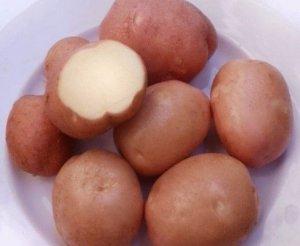 Сорт Беллароза