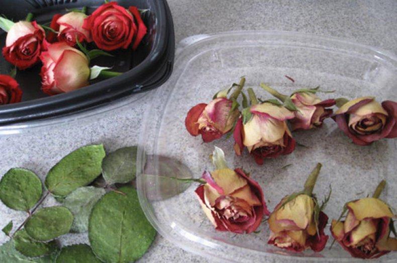 Сушка роз