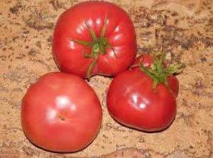 томат, медовый, описание, фото