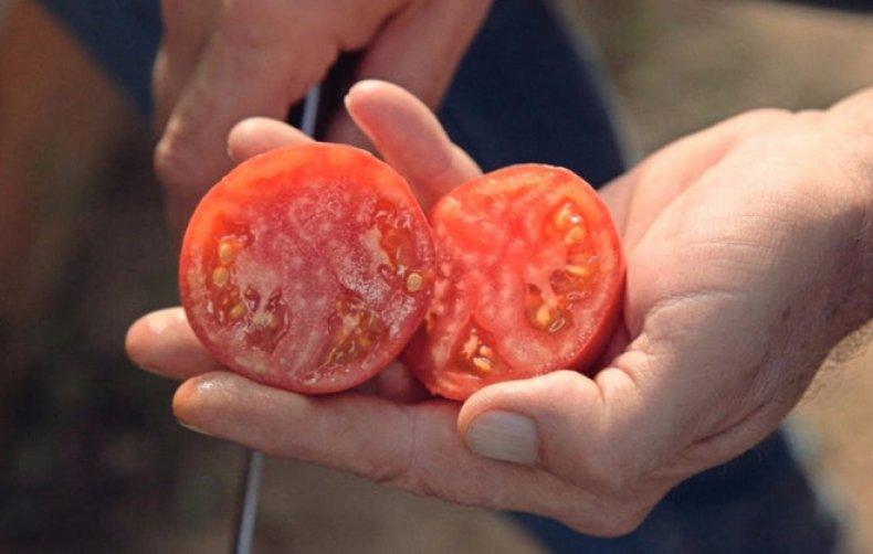 томат, бокеле, фото, описание, сорт, описание сорта