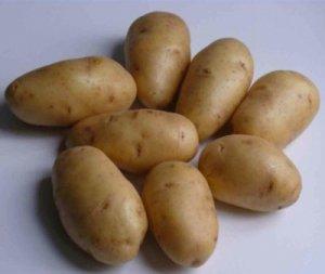 Картофель «Импала»
