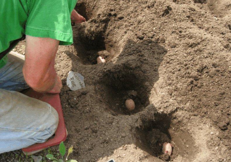 Гладкая система посадки картофеля