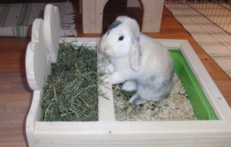 сенник, кролик, кормушка, сено, собственными руками, сенник собственными