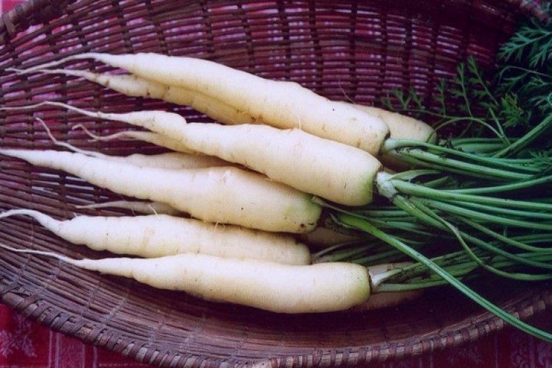 белая морковь полезные свойства