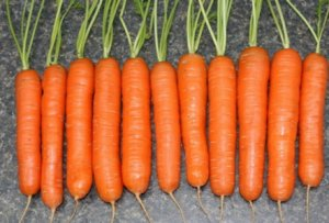 морковь, сорт, тушон, описание, фото