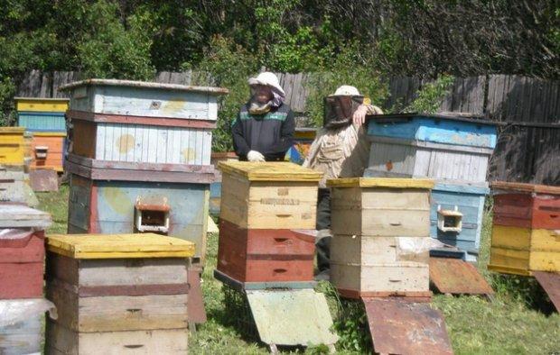 купить улей для пчел цена в псковской области ДентаСтайл Новая улыбка