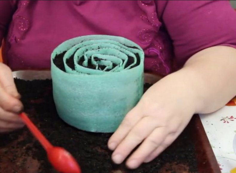 как посадить семена в улитку из туалетной