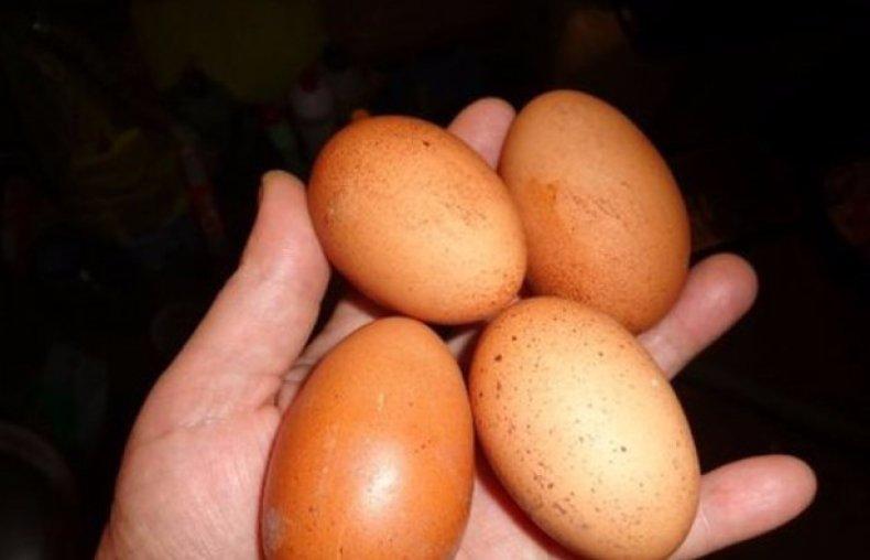 Отбор яиц для инкубации