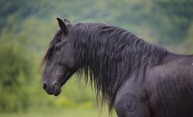 свадебном карачаевская порода лошадей видео Кроуфорд секрет идеальной