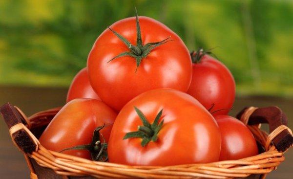 Описание томата Ирэн культивирование и выращивание сорта