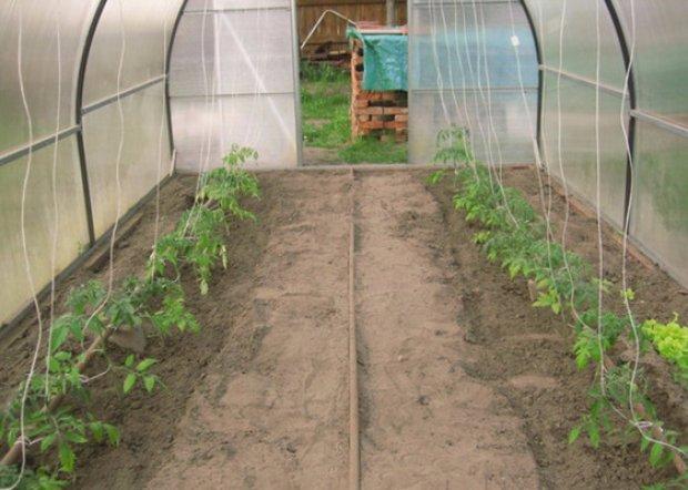 Посадка помидор в теплице из поликарбоната: этапы и…