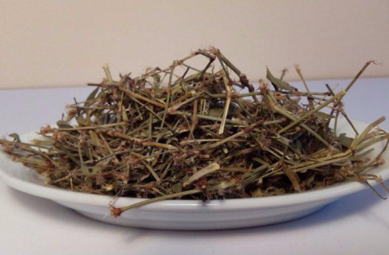 трава, спорыш, лечебный, противопоказание, медицина