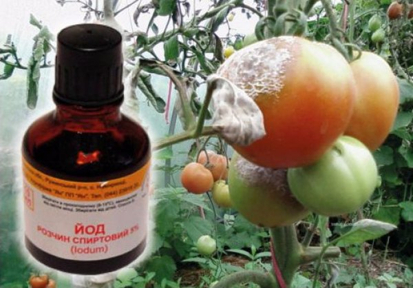 Йод для рассады: подкормка огурцов, томатов и других культур
