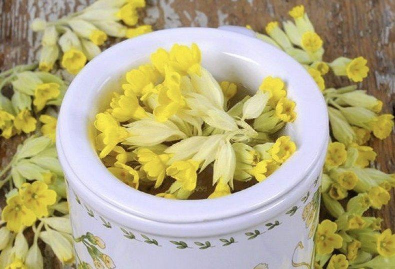 Цветки первоцвета