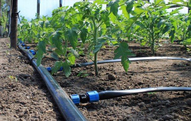 Системы капельного полива для теплицы: фото и видео