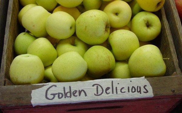 Характеристика яблони Джонаголд и описание лучших клонов сорта