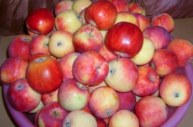Фото описание яблонь сорта подарок осени