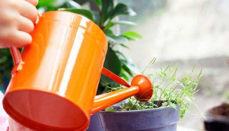 растение, алоэ, древовидный, столетник, описание, химический