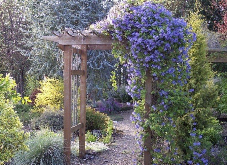 Садовая арка украшена княжиком