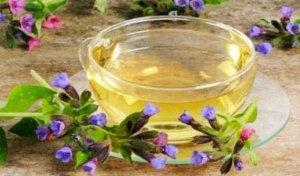 Медуница: лечебные свойства, применение и противопоказания